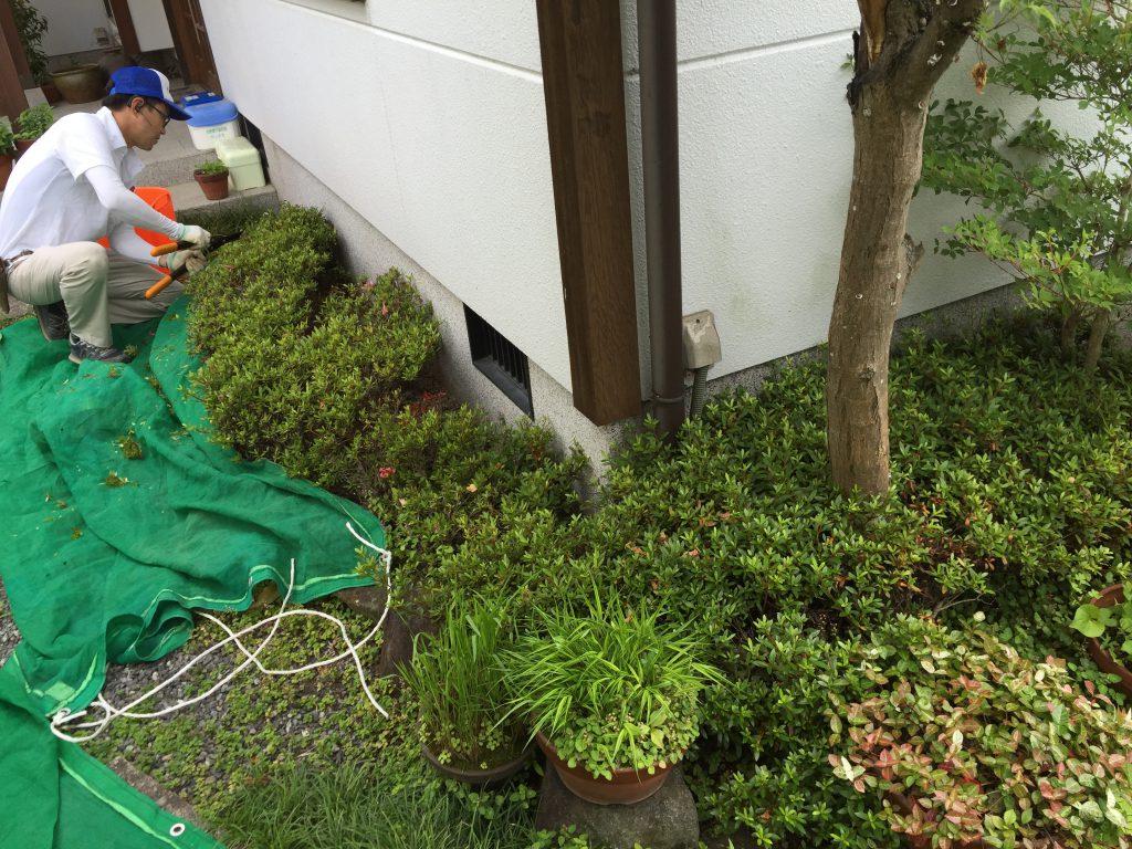年間メンテナンス_低木刈込み